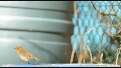 tub 2 (spex357) Tags: bird gardenbirds giottos nikond600 nikkor400mmf35