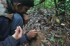 Termite mounds (mansi-shah) Tags: rainforest farming mounds coorg termite madikeri termitehill forestecology mansishah rainforestretreat jenniferpierce ceptsummerschool