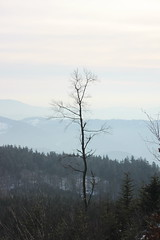 IMG_1655 (stephanie.thoma) Tags: winter black forrest mummelsee
