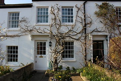 Richmond house (Millykatemacky) Tags: old white house tree cute outside small cottage richmond gnarled twisty twisting terraced trailing creaping