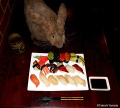 Dr. Takeshi Yamada and Seara (Coney Island sea rabbit) at the Sake Japanese buffet restaurant in Brooklyn, New York on March 24, 2016.  20160324Thu DSCN4605=2030C. assorted sushi (17)  (Excellent minus cold eel sushi) Mango sushi was unexpectedly nice. (searabbits23) Tags: wild ny newyork sexy celebrity rabbit art hat fashion animal brooklyn sushi asian coneyisland japanese star restaurant tv google king artist dragon god manhattan famous gothic goth uma ufo pop taxidermy vogue cnn tuxedo bikini tophat unitednations playboy entertainer oddities genius mermaid amc mardigras salvadordali performer unicorn billclinton seamonster billgates aol vangogh curiosities sideshow jeffkoons globalwarming takashimurakami pablopicasso steampunk damienhirst cryptozoology freakshow seara immortalized takeshiyamada museumofworldwonders roguetaxidermy searabbit barrackobama ladygaga climategate minnesotaassociationofroguetaxidermists  manwithrabbit