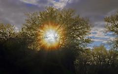 Sunlight in tree (Denis Vandewalle) Tags: light sun sunlight tree nature clouds sunrise soleil lumire nuages arbre contrejour rayons nuances solaires