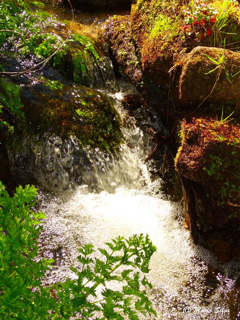 Águas Frias (Chaves) - ... a água corre agitada no ribeiro ...