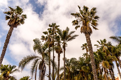 Sky look better with palm trees (Matthew Warner) Tags: california usa beach outdoors us losangeles unitedstates santamonica pacificocean santamonicabeach