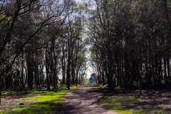 (balzs) Tags: uk sun nature forest birmingham sutton suttonpark