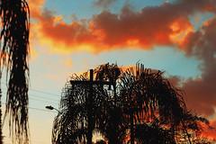Sorocaba's Sunset (TheJennire) Tags: camera trees light sunset shadow brazil sky orange naturaleza sun sunlight luz nature brasil clouds canon cores photography photo colours foto natureza young cu colores teen cielo nubes indie nuvens fotografia sorocaba camara tumblr