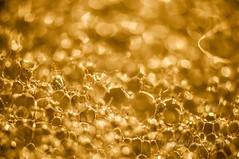 Burbujas doradas (Joaquim F. P.) Tags: espaa macro studio lens real golden spain nikon bokeh estudio ring depthoffield plastic foam micro adapter bubble extension plastico microscope burbuja catalua tarragona dorado anillo dx espuma cfi nops d300 objetivo microscopio 10x costadaurada 42x
