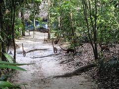 "Tikal et ses pizotes <a style=""margin-left:10px; font-size:0.8em;"" href=""http://www.flickr.com/photos/127723101@N04/26145835302/"" target=""_blank"">@flickr</a>"