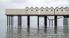 Plsjbaden Helsingborg (Hkan Dahlstrm) Tags: sea architecture photography se skne sweden cropped f71 helsingborg resund 2016 kallbadhus plsjbaden plsj skneln xe2 sek strandvgen40 xf1855mmf284rlmois 1005042016160322