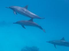 IMG_0601 (eye[4]eye) Tags: egypt diving gypten tauchen bluewaves