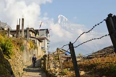 DSC_4737 (jdcruzba) Tags: nepal nikon sigma abc annapurna annapurnabasecamp d5100