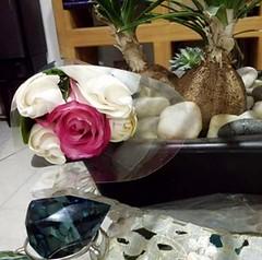 Regalo #flores #amor #amour #girlfriend #petitami #fidanzata #amore #floeur #fiore #sempre (palomadiaz2) Tags: flores girlfriend amor amour fiore sempre amore petitami fidanzata floeur