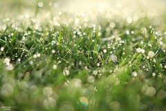 Morning Dew (martin_king.photo) Tags: morning summer favorite green beautiful field grass lines canon landscape during landscapes countryside early photo spring highlands scenery europe king day republic colours exterior shot martin czech photos bokeh shots outdoor hill great young earlymorning scenic atmosphere east dew april fields moment wonderland eastern region hilly moravian goldenhour jaro exteriors morava zem kraj esko springfields bokehlicious bokehart jihomoravsk krsn martinkingphoto coloursofmoravia
