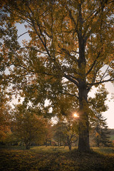 Ambience (M J Adamson) Tags: autumn trees newzealand nature golden nz ambient timaru ambience southcanterbury