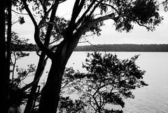 Recherche Bay (Kent Holloway) Tags: au australia tasmania leicam6 recherche fujiacros100 summicron35mm