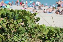 IMG_0077 (Mike H Photography) Tags: sea sun beach relax joy sunny dania