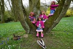 Tivi klettert auf den Baum und ruft ............................... Hilfe, die Enten kommen ... (Kindergartenkinder) Tags: park essen dolls outdoor sony feld wiese blumen ente landschaft garten annette personen tivi stockenten milina gruga himstedt annemoni kindergartenkinder sanrike