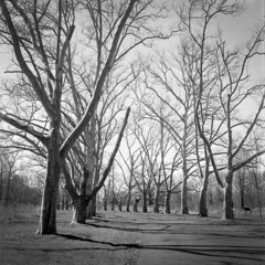 Trees (Tony__K) Tags: blackandwhite bw tlr nature analog newjersey minolta kodak nj ishootfilm d76 kodaktrix400 autocord rokkor dukesfarm