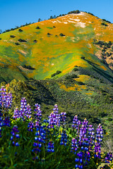 California Spring Wildflowers: Los Padres National Forest - Figueroa Mountain: Dr. Elliot McGucken Fine Art Landscape & Nature Photography: Grape Soda Lupine & California Poppies! Nikon D810 (45SURF Hero's Odyssey Mythology Landscapes & Godde) Tags: california mountain art nature forest landscape photography los spring nikon dr fineart fine wideangle national poppies padres wildflowers soda elliot figueroa grape lupine fineartphotography naturephotography wideanglelens naturephotos mcgucken d810 fineartphotos fineartphotographer fineartnature elliotmcgucken elliotmcguckenphotography elliotmcguckenfineart masterfineartphotography