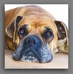 REFLEXIONANDO. (manxelalvarez) Tags: fauna perros animales reflexionando