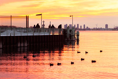 Waiting for the Ferry (A Great Capture) Tags: city winter light sunset people lake snow toronto ontario canada cold reflection bird water colors birds ferry evening dock colours photographer sundown dusk ducks canadian lakeontario sunsetting on agc wardsisland 2016 ald ash2276 adjm lhiver ashleylduffus wwwagreatcapturecom agreatcapture