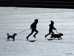 Harbourside walkies (Jel) Tags: uk shadow england sun brick dogs silhouette bristol walking children harbour pavement running paving harbourside