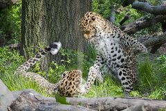 70.0-210.0 mm f-4.0-5.6(_NDS2595) (gnuelkevin) Tags: animal island zoo spring staten 2016