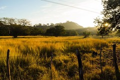 The last ten miles of El Salvador was all picturesque fields on amber. Was windy and peaceful. #theworldwalk #travel #elsalvador