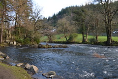 DSC_0045 (Lord Edam) Tags: winter nature water grass wales river stones wildlife betwsycoed conwy llugwy walkafon
