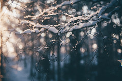 Circular Light (vihay) Tags: winter bokeh 58mm circular salo helios 442 2016 halikko vsco