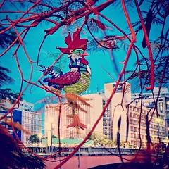 """O carnaval q no estou.... Mas at q o """"frango""""  deixa de ser bonito... Hahaha #carnavalrecife (Ann Gominho) Tags: de mas photos o bonito carnaval ser q no hahaha  at estou frango deixa carnavalrecife"""