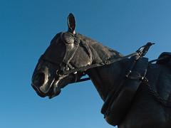 Liverpool Carters Working Horse (Jackie & Dennis) Tags: albertdock workinghorse museumofliverpool liverpoolcarters judyboyt liverpoolcartersworkinghorsememorial workinghorsememoria jimmydoran