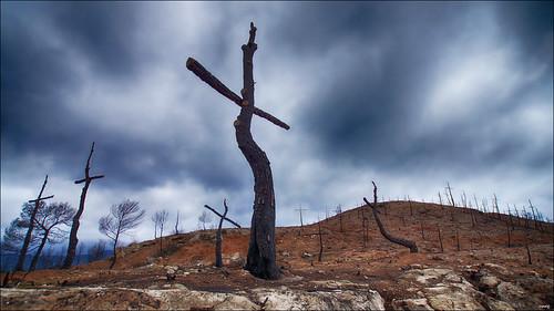 El cementerio del bosque quemado