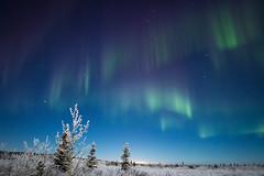 Alaskan nightlights (frostnip907) Tags: blue winter sky moon white snow green ice alaska night stars purple hoarfrost astrophotography aurora moonlight nightsky tundra northernlights auroraborealis taiga auroras canon7d rokinon14mmf28