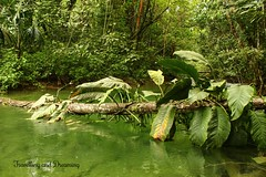 Lacandon Jungle, Chiapas