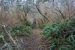 Trail shot (rozoneill) Tags: california park city rock creek river coast big state hiking lagoon crescent trail national redwoods prairie false klamath yurok