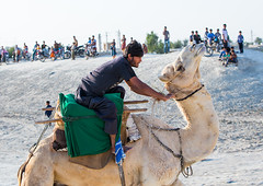 a man racing a camel during a traditional wedding, Qeshm Island, Salakh, Iran (Eric Lafforgue) Tags: travel wedding people man men animal horizontal race outdoors photography amusement persian asia desert iran muslim islam traditional ceremony culture traditions marriage competition persia folklore run racing celebration riding camel jockey activity custom cultures adultsonly cultural oneperson islamic middleeastern persiangulf sunni qeshmisland menonly 20sadult youngadultman hormozgan  onemanonly  1people  iro straitofhormuz  colourpicture  salakh iran034i9361 camelrunning