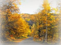 The soft light of the autumn (Stella VM) Tags: road autumn trees mountain colour nature beautiful yellow forest landscape bulgaria  vitosha        kladnitsa