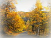 The soft light of the autumn (Stella VM) Tags: road autumn trees mountain colour nature beautiful yellow forest landscape bulgaria есен vitosha пейзаж планина гора път българия витоша кладница kladnitsa есенен