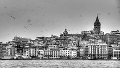 Birds flying high you know how I feel (erdalisikak) Tags: old sea bw white black tower monochrome birds still nikon year ngc over istanbul historical peninsula hdr bosphorus stands galata 18105 goldenhorn hundreds d7000