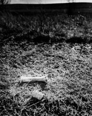 (nsandin88) Tags: park wild sky blackandwhite bw tree abandoned 120 mamiya film nature clouds mediumformat dark landscape stand blackwhite nationalpark natural rustic parks ishootfilm creepy bones kansas epson prairie bandw rodinal exploration preserve ilford manualfocus tallgrass oldwest rz67 panf tallgrassprairie selfdeveloped standdevelopment mamiyarz67 developedathome manualexposure panfplus50 standdeveloped v850