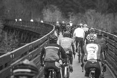 TImber Logjam (gabriel amadeus) Tags: trees rain bike bicycle fog oregon portland cycling coast ride mud tires dirt trail riding range banks gravel grinding vernonia unpaved