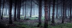 The woods V (thegeigerman) Tags: trees fog forest fuji xt1 fujix bokehrama fujinon56mm12