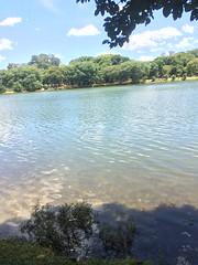 Passeio no Ibirapuera (Lucas_Araujo94) Tags: park parque brazil sopaulo ibirapuera