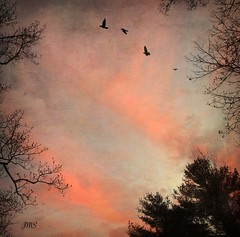 Sunrise (jeanne.marie.) Tags: trees texture colors birds clouds sunrise quiet silhouettes serene pinks iphoneography iphone5s