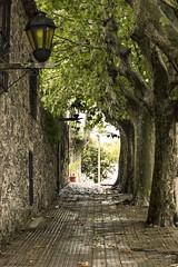 tunel (lili.raijel) Tags: arbol calle colonial colonia traveling farol tunel turismo historia antiguo empedrado