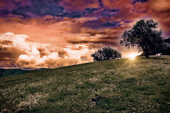 Toward the spring (* landscape photographer *) Tags: sunset italy tree colors alberi clouds europe tramonto nuvole valle valley sasi colori paesaggio salvo lucania senise nikond90 landscapephotographer sinni salvyitaly