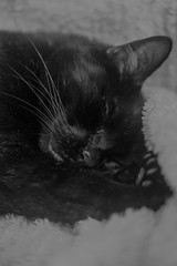 Lieblingsguschtl :-) (dretschi) Tags: black cute cat decke ohr schlafen fell schwarz kater pfote schnurrhaare süs stubentiger ekh