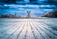 A lone tree sits in the heart of Amish country (Matt Shiffler Photography) Tags: lines composition country bluesky infrared lonetree middlefield leadinglines amishcountry ruralohio