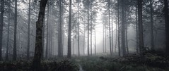 Lost in the Mist (Augmented Reality Images (Getty Contributor)) Tags: longexposure trees winter mist forest canon woodland landscape scotland path perthshire wideangle lifeless leefilters
